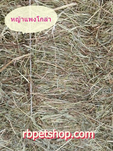 หญ้าแพงโกล่า ขนาด 10 kg