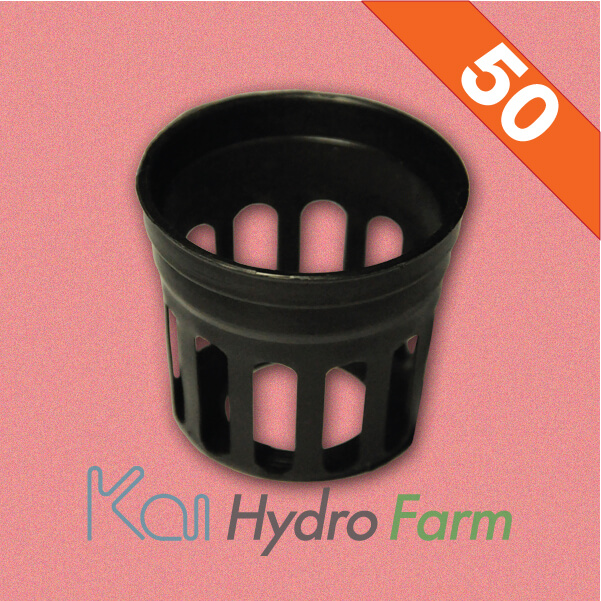 ถ้วยปลูกสีดำ (สำหรับฟองน้ำ) 50 ใบ