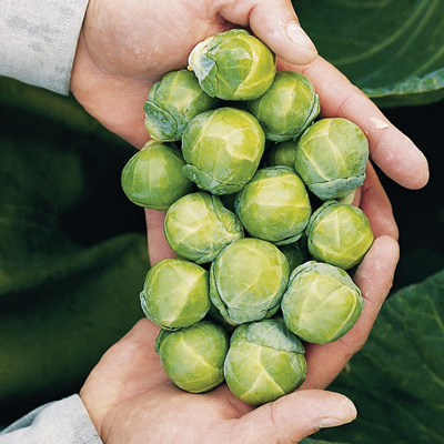 Nautic Brussels Sprouts (กะหล่ำดาวนัวร์ติกส์)