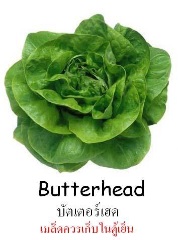 บัทเตอร์เฮด Butterhead