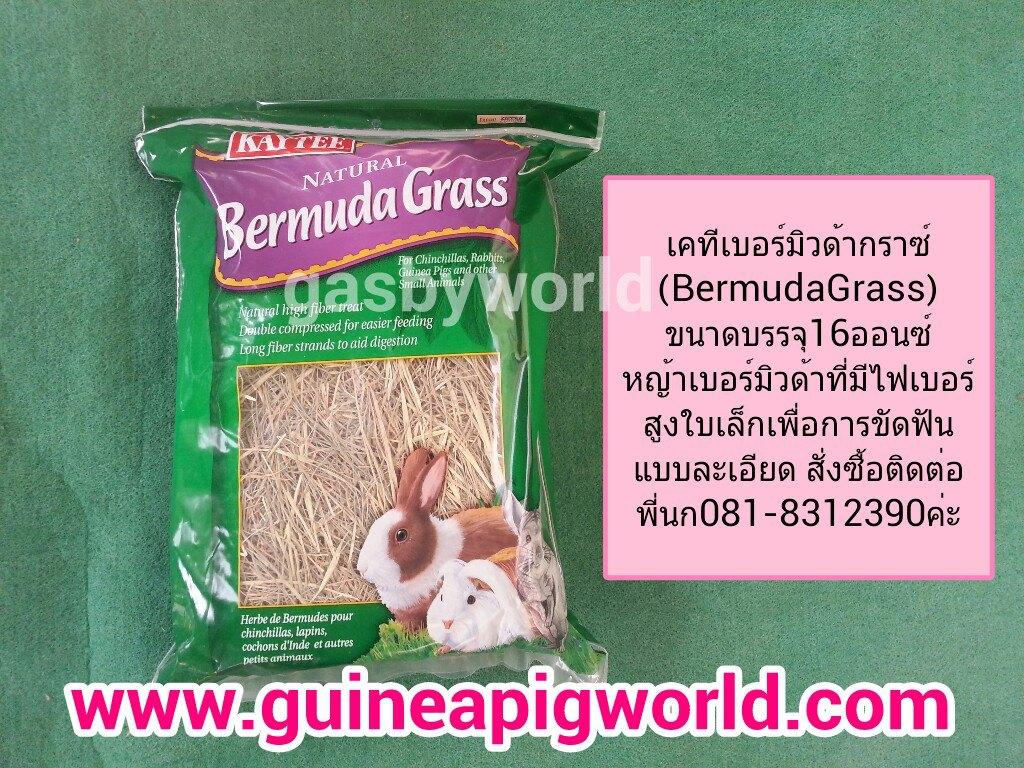 หญ้าเบอร์มิวดา Kaytee Bermuda Grass