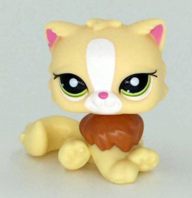 แมวเปอเซีย สีเหลืองคอน้ำตาล #463