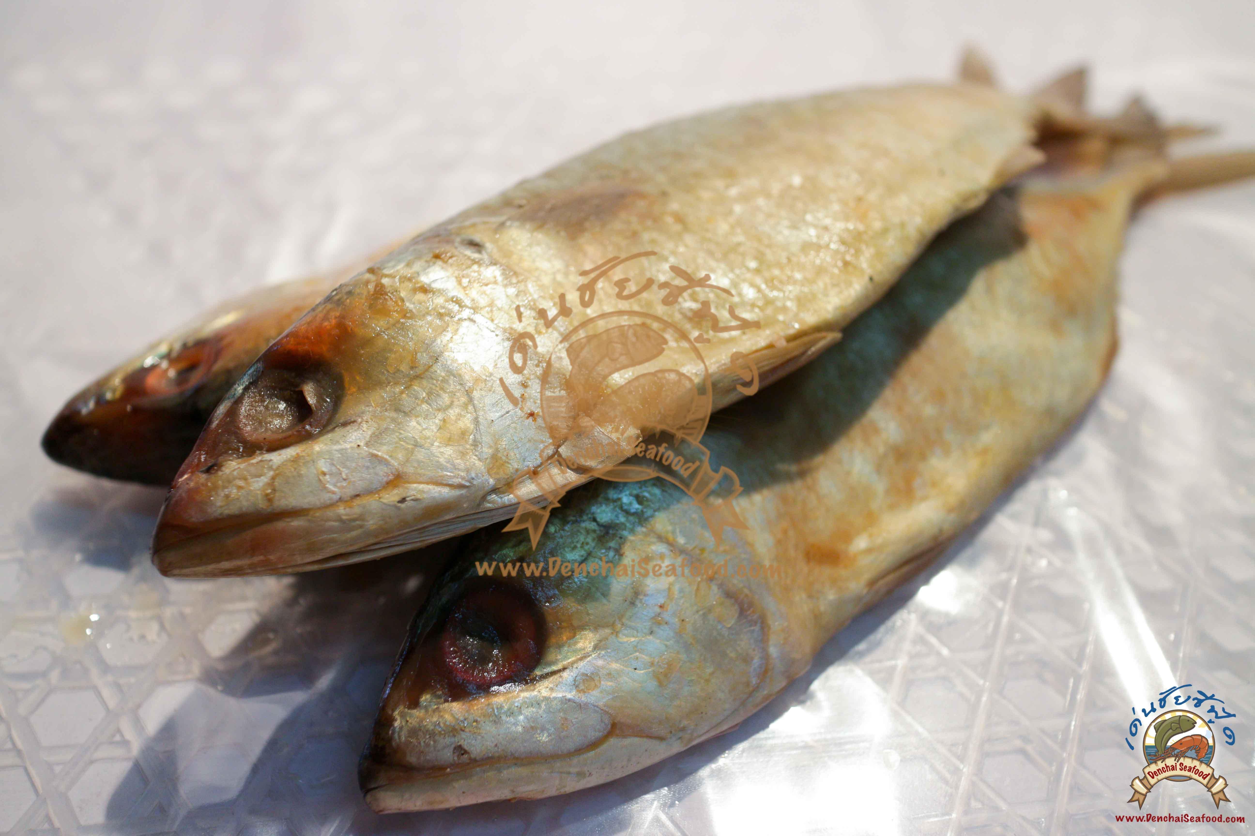 ปลาทูหอมจัมโบ้